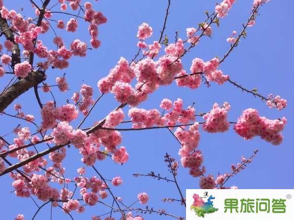 <b>2-4月份昆明-西双版纳-大理-丽江7日游特价 云南旅游热门推荐</b>