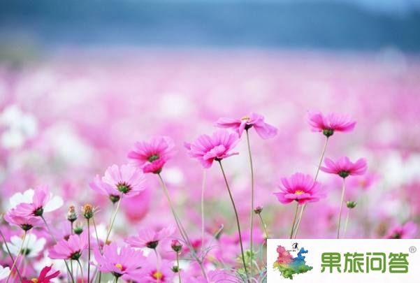 <b>昆明、大理、丽江、香格里拉、泸沽湖、西双版纳生态休闲之旅</b>