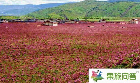 <b>昆明、大理、丽江、泸沽湖、西双版纳生态休闲之旅【带石林九乡】</b>