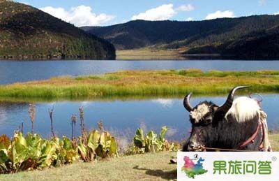 直达游—丽江、香格里拉、泸沽湖七日游LX1