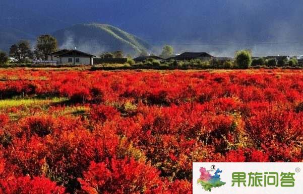 超值休闲游—丽江、香格里拉、大理六日游 HX