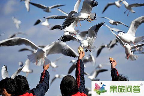 滇池海鸥-副本