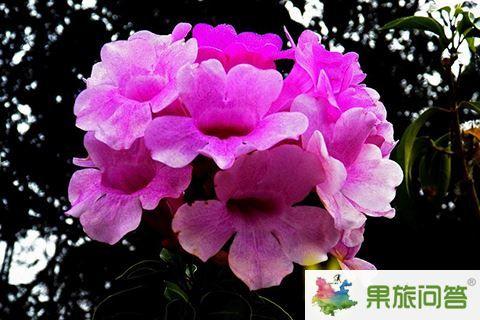 热带花卉园